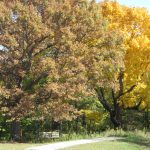 Bench with Fall Trees 1